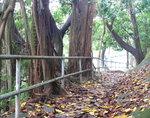 005:金督馳馬徑與部份大潭郊遊徑及樹木研習徑重疊