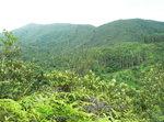 007:嶂上郊遊徑仰望石屋山