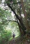 023:落蓮北林徑途中