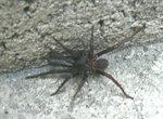 015:蜘蛛(盧吉道)