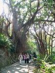 038:印度橡樹(盧吉道)