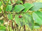022:小甲虫