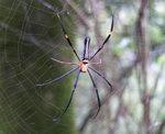 030:人面蜘蛛(蓮北林徑)