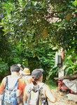 019:大樹菠蘿(大輋)