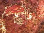 天然彖文(黃金海岸) P1500469