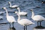 天鵝湖 6F1060017