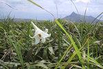 """""""Flower & Sharp Peak 花與蚺蛇尖"""", Pai Ngak Shan牌額山, 30/6/2002."""