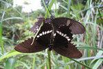 """""""Butterflies 雙蝶"""", 28/5/2003"""