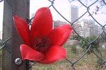 """Fallen Flower"", Ha Yuen Leng 下元嶺, 3/3/2003"