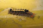 2. Caterpillar, near the bus stop, 3/6/2005.