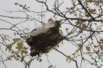 2011030632 蟻巢