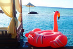 Poor flamingo was grounded after being told she was not able to swim in the Infinity Pool