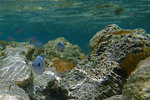 and found some fishes hiding around the rocks