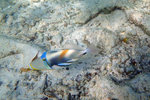 The same old friend I saw every time I snorkelled!