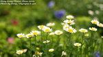 FlowerShow02