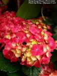 FlowerShow11