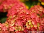 FlowerShow13