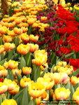 FlowerShow42