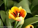 FlowerShow45