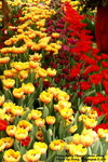 FlowerShow46