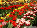 FlowerShow48