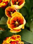 FlowerShow53