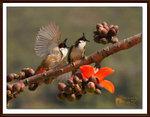 Photos of the Week - Wildflowers (Finalist)