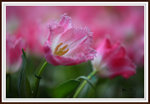 MegaShot in Facebook- Flower Gallery - Photo of the day - Sept 2012