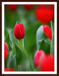 Photos of the week - Red Theme - May 2011