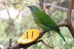 bird 114