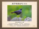20160124 紫嘯鶇