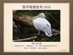 20160221 塘鵝