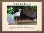 20160731 小白鷺