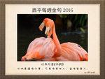 20160821 紅鶴