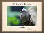 20160925 灰頭椋鳥