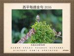 20161127 山麻雀