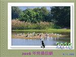 2016年鳥攝回顧
