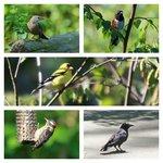 Canada Bird 8