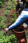 20141205-my_garden-10