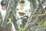 20111013-hoihawan_10-06