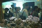 20111111-hoihawan_02-03