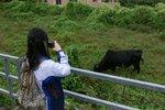20111111-hoihawan_01-11