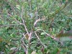 20120212-plantation_03-13