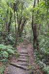 進入林後開始上山
