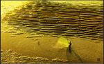 黃金灘上有魚蝦