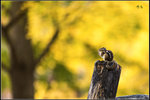 蕭蕭遠樹疏林外 空水澄鮮一色秋