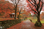Japan_41