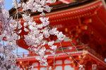 Sakura_14