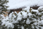 Snow_82