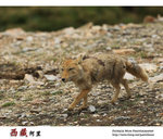 IMG_8793a